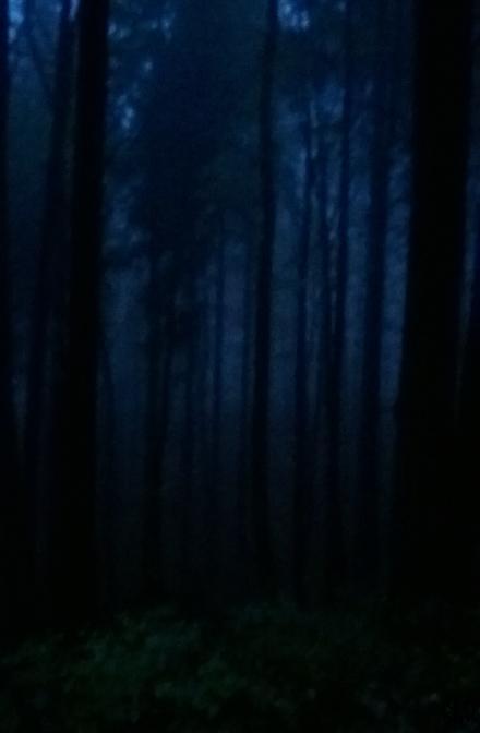 Herbstwald dunkel